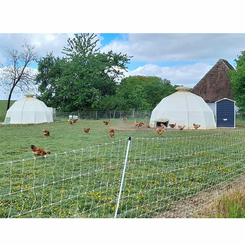 Abri poules, poulets et pintades